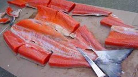 اصول قطعه بندی ماهی