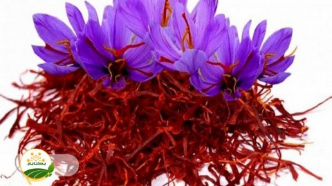 عناصر ریز مغذی کلیدی در زراعت زعفران