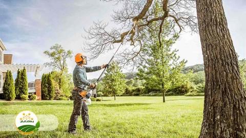 مزایا و معایب هرس درختان میوه