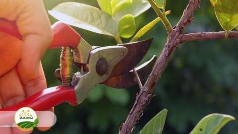 زمان مناسب هرس درختان میوه