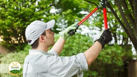 انجام هرس مناسب برای باغ زردآلو و انگور