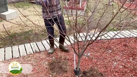 تفاوت هرس و تربیت درختان
