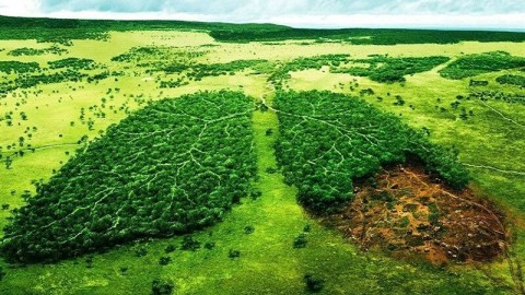 تاثیرکرونا بر محیط زیست