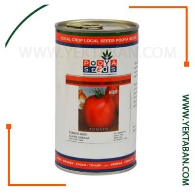 بذر-گوجه-فرنگی-سوپر-پویا