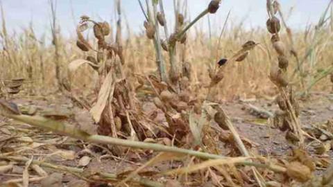 فعالیت-حفظ-نباتات-در-کنترل-عوامل-خسارت-زا