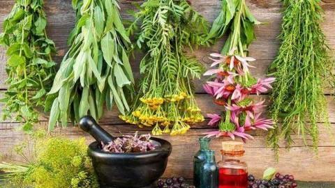 تجارت گياهان دارويى در ايران