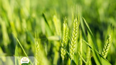راه کارهای افزایش سود کشاورزان