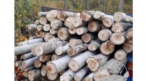 خریدو قطع انواع درخت